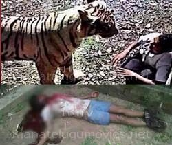 Delhi Zoo Tiger Episode Exclusive Photos After Killing