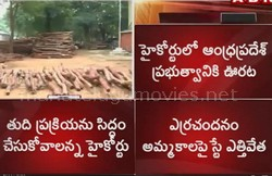 High Court allows auction of red sandalwood logs in AP