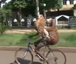 Funniest bike transport I ever saw