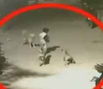 Amazing Funny Video | Brave Boy Escapes from Street Dogs
