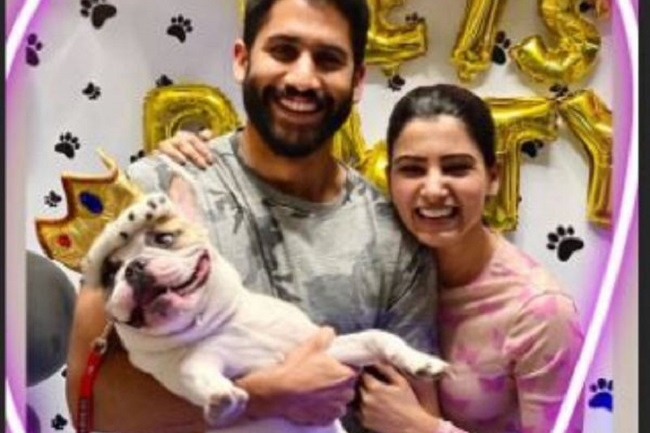 Pic: Samantha and Chaitanya host party for their pet